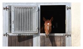 Ansicht einer Fensterbox mit Pferd